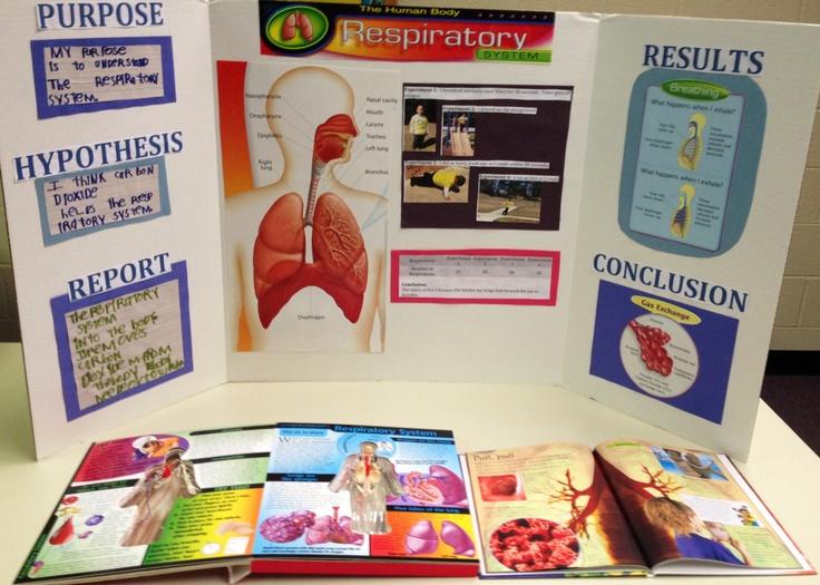 Respiratory System Cake