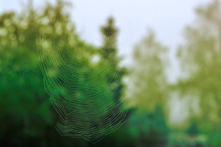Spider web, spider's web, pajęczyna