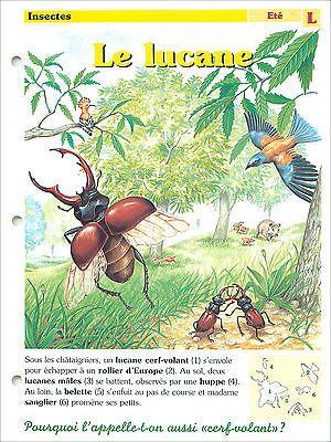 Lucane cerf volant Lucanus cervus Stag beetle Lucanidae  FICHES CARTES ANIMAUX