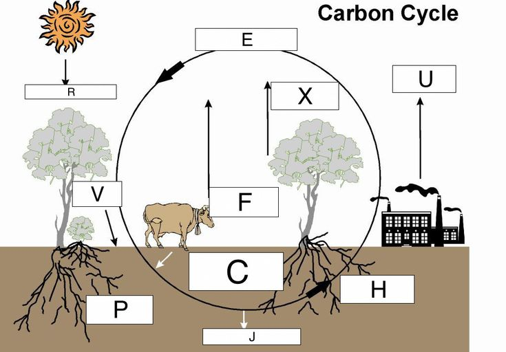Nitrogen Cycle Diagram To Label Best Of Cycles Of Matter Lesson 0033 Tqa Explorer In 2020