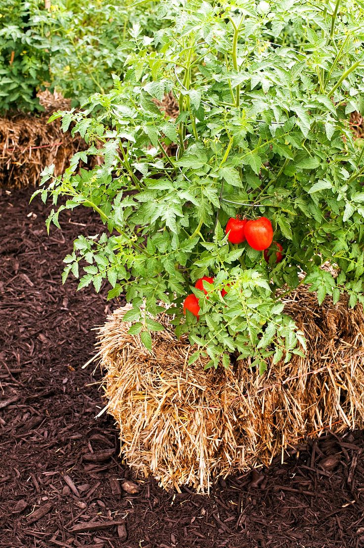 check out the strawbale gardening movement that has become one of this summers hottest gardening trends ap photocool springs press