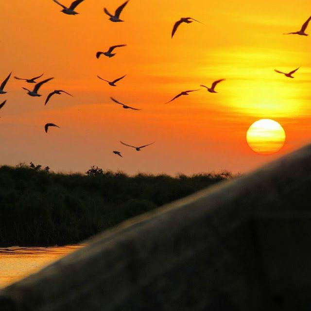 Birds at sunset over Lake Victoria in Entebbe, Uganda