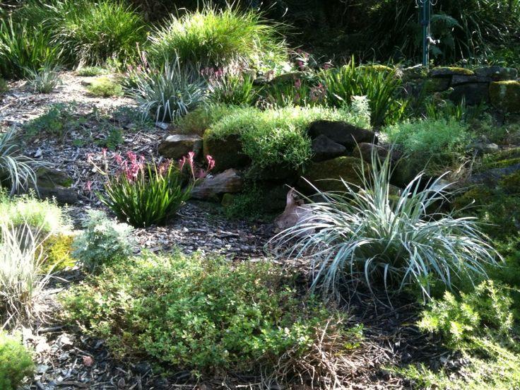 Native Garden 1