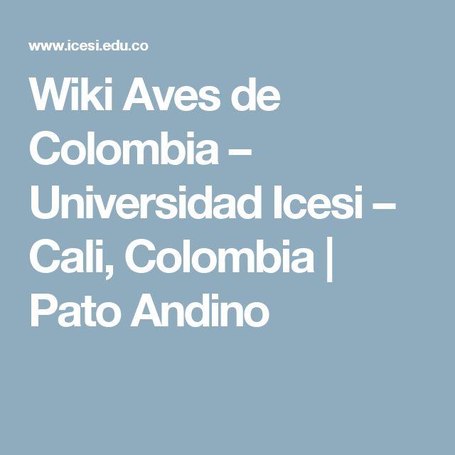 Wiki Aves de Colombia – Universidad Icesi – Cali, Colombia | Pato Andino