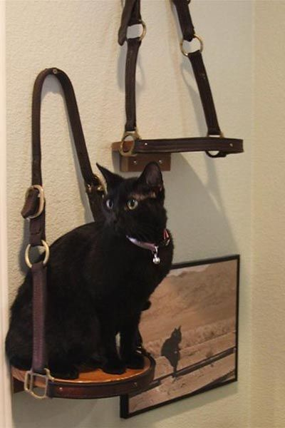 Shelf made from leather halters...to hold knick-knacks, or cats...? :) making this for my mom and Glenn this Christmas for sure.