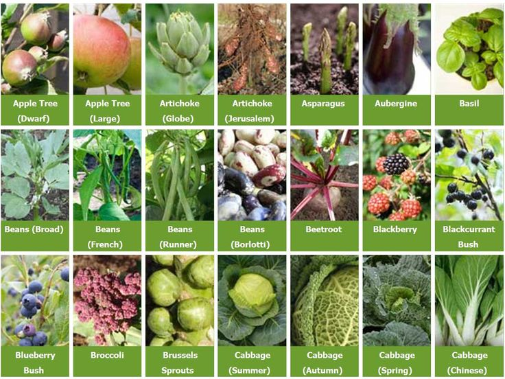 Bon GrowGuides For Over 290 Different Vegetables, Herbs, Fruit And Cover Crops,  Possibly All