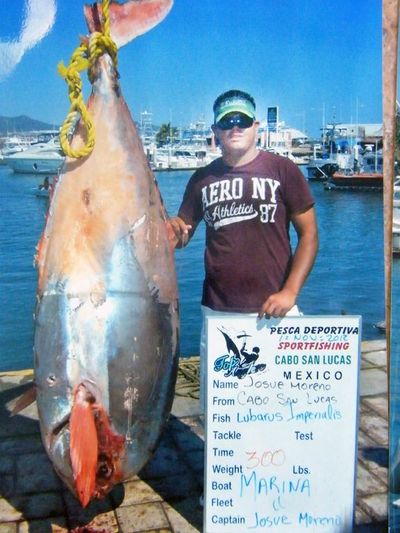 A rare fish taken off Cabo San Lucas ends up getting stolen in bizarre tale