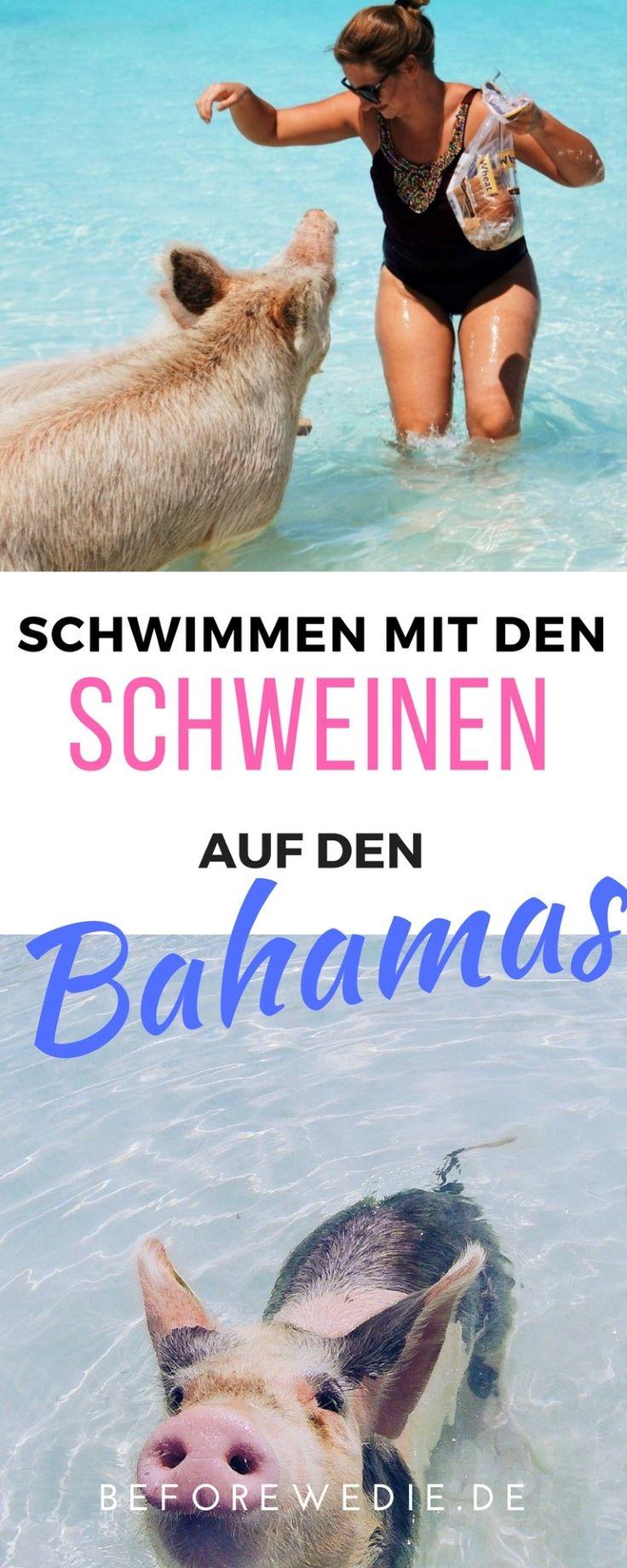 Schwimmen mit den Schweinen auf den Bahamas: We did it!