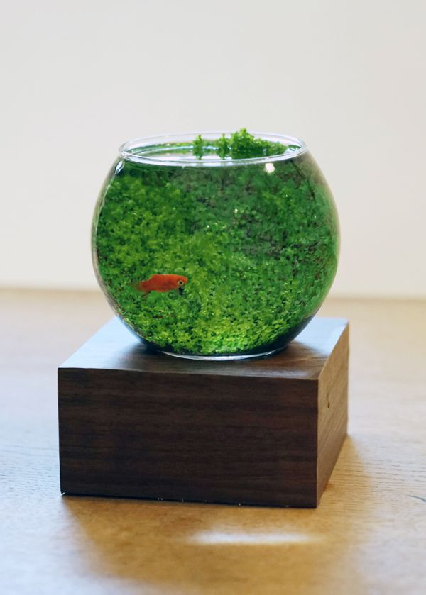 I don't like the size or the fish but a really big bowl with that algae/plants