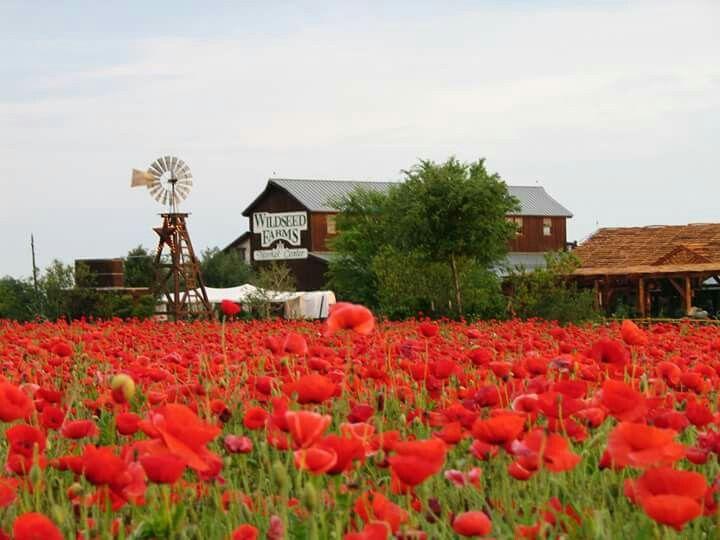 Wildseed Farms in Fredericksburg, Texas