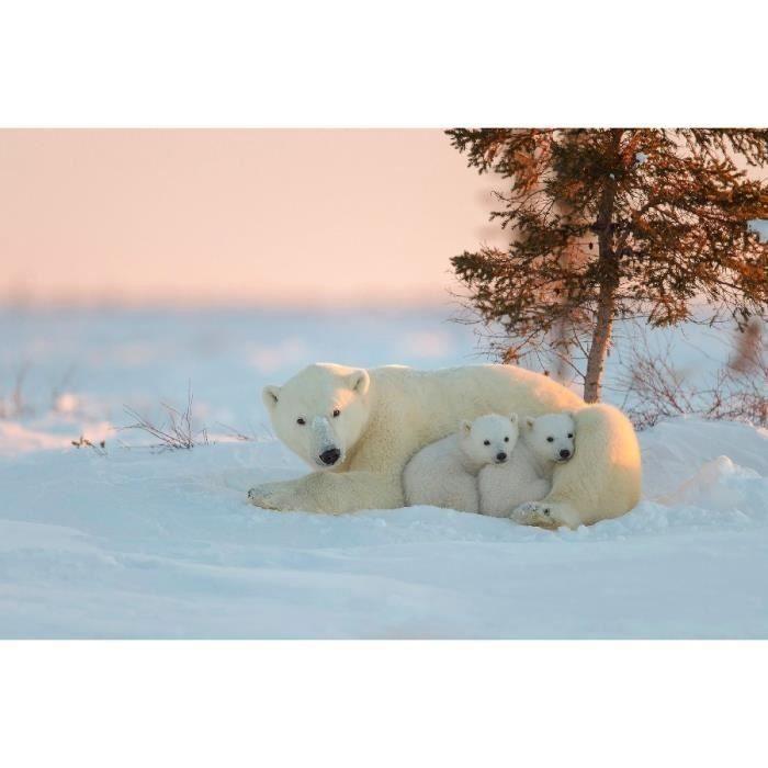 Epingle Par Mc Sur Ours Blanc En 2020 Ours Polaire Animaux Polaires Ours Blanc