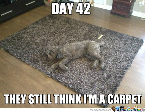 105 Best Flooring Humor Images On Pinterest Carpet Rugs