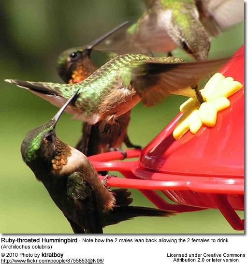 Hummingbirds.Hummingbirds Heavens, Hum Birds, Hummingbirds 3, Hummingbirds Collection, Hummingbirds Feeding, Ahhhh Hummingbirds, Colibrí Comiendo, Feathers Friends, Hummingbirds Info