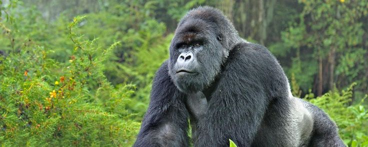 BBC - Earth - What is the point of saving endangered species?