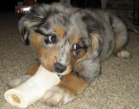 i would kill to know what tikka looked like as a puppy.