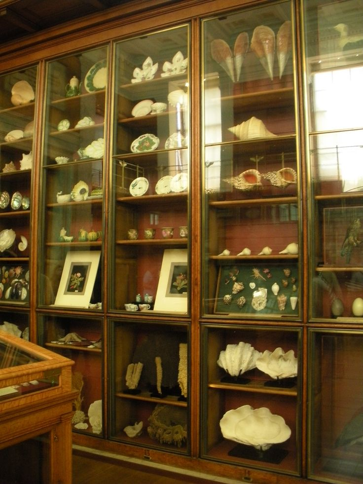 A curiosity cabinet in the British Museum, containing teapots and tureens as well as some Sloaniana — items from the foundational collection of Sir Hans Sloane, who bequeathed his antiquities, manuscripts, and vegetable lamb to George II so that they could become the property of the British people