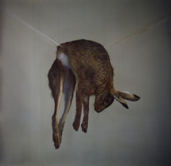 Hare 1, 2012