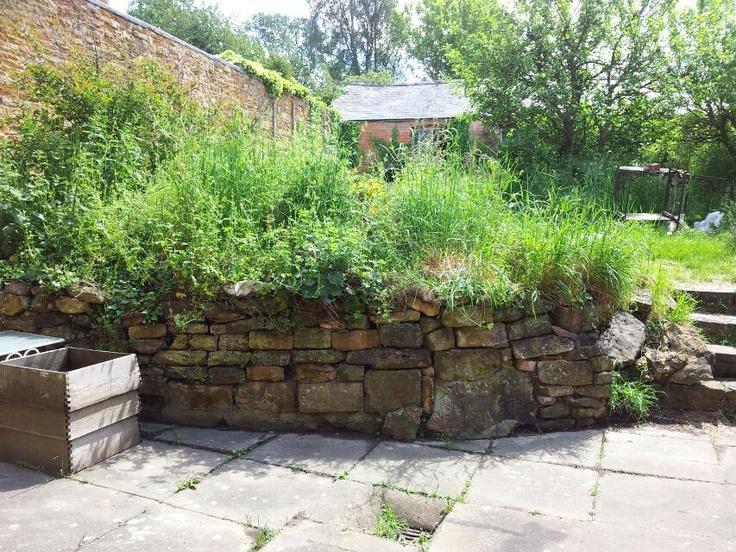 Back garden: Back Gardens, Tumbledown Cottages