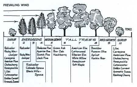 Windbreak trees nebraska figure 1 cross section of a for Garden windbreak designs