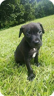 PetHarbor.com: Animal Shelter adopt a pet; dogs, cats, puppies, kittens! Humane Society, SPCA. Lost & Found. I AM LOCATED IN BOSLEYS PLACE RESCUE IN GA, & MY ID#: 06012017, AND MY NAME: GREY.