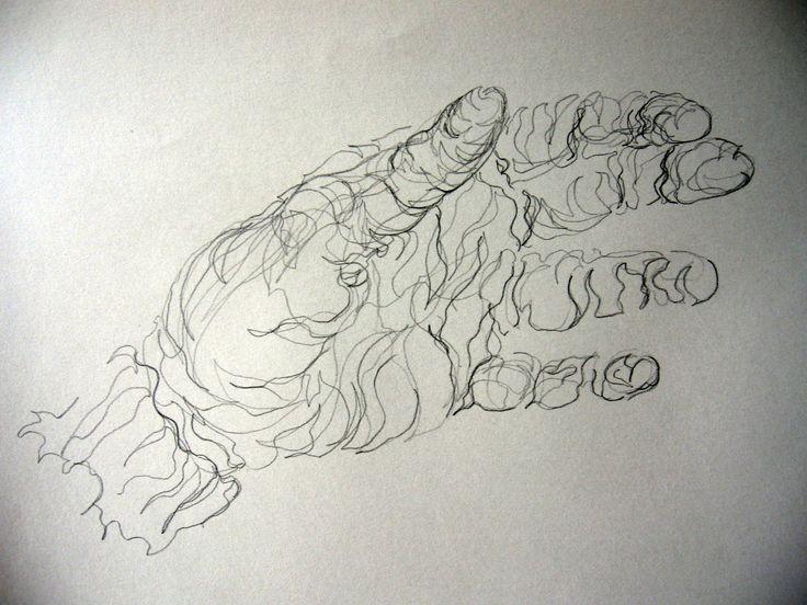 Contour Line Drawing Face : 17 best contour art images on pinterest elementary
