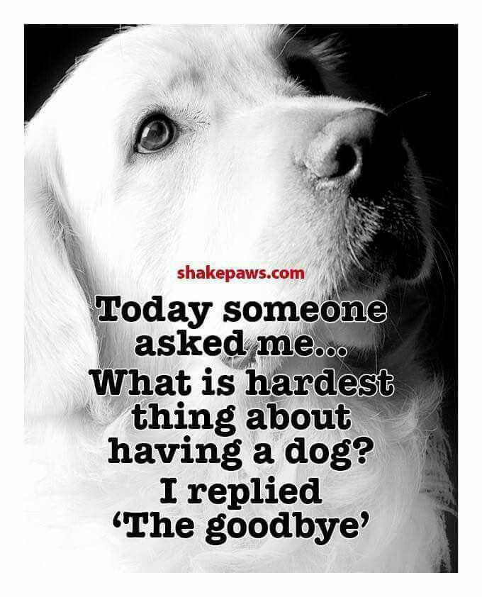 Loss Of Pet Quotes For Dogs: Best 25+ Pet Loss Grief Ideas On Pinterest