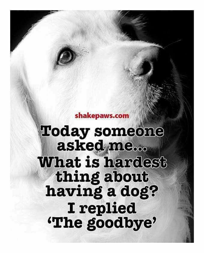 Dog Death Quotes: Best 25+ Pet Loss Grief Ideas On Pinterest