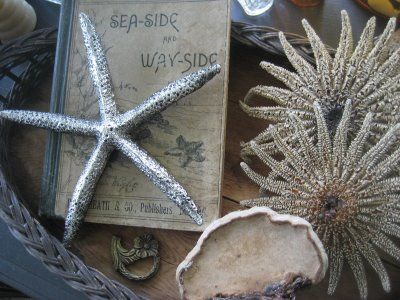 sea treasures - sea-side & way-side~