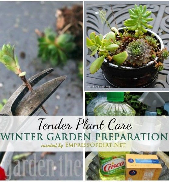 Winter Garden Prep: Tender Plant Care