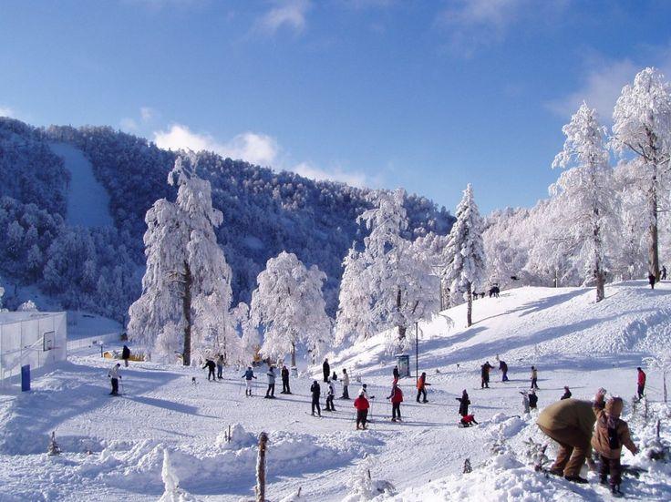 Kartepe, İstanbul'a 100 km uzaklıkta popüler kayak tesislerinin bulunduğu haftasonu tatil yapmak isteyenlerin ilgi odağı haline gelen bir kayak merkezidir.