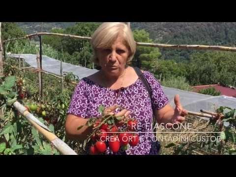 Re Fiascone. L'infinito patrimonio agroalimentare della Costa d'Amalfi