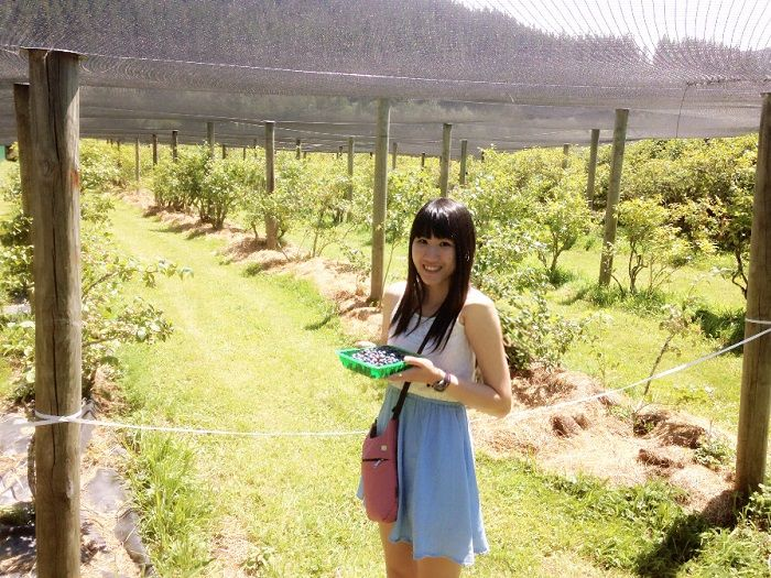 Pick Your Own (PYO) Blueberry in Wellington