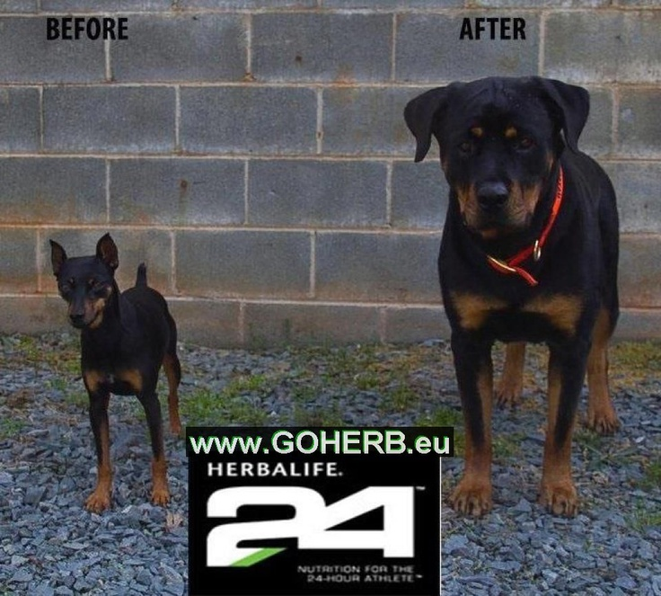 H 24 Before and after  www.goherb.eu
