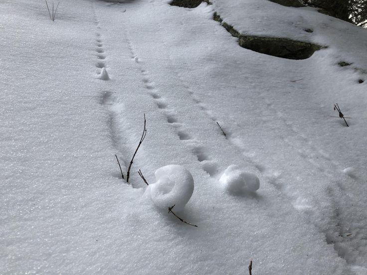 Snow rolls itself into Fibonacci spiral