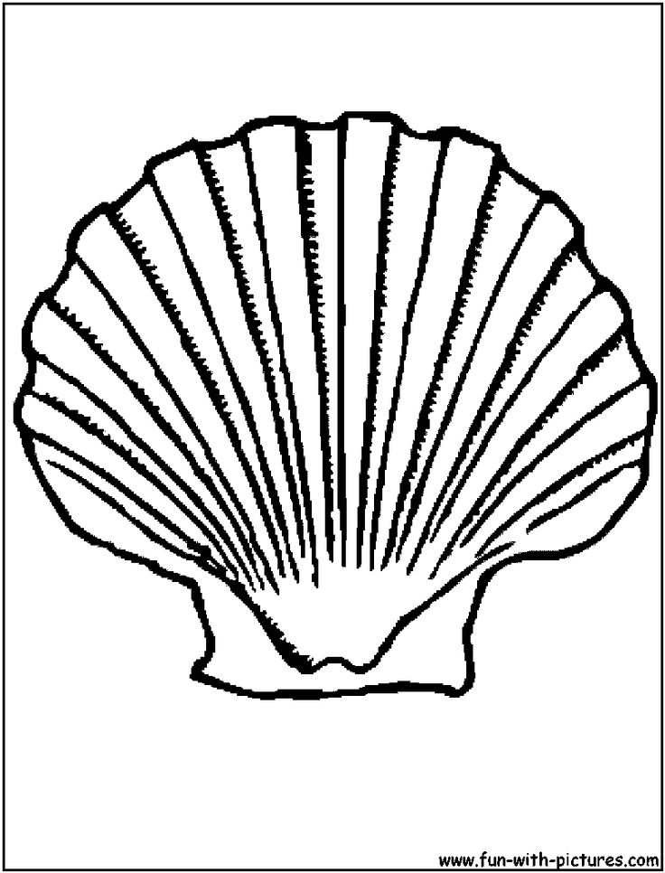 24 best images about rocks shells for mike on pinterest for Shells coloring page