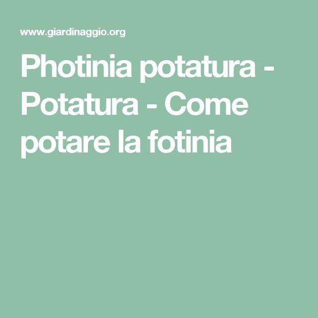 Photinia potatura - Potatura - Come potare la fotinia