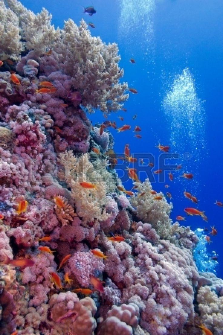 colorido arrecife de coral con corales blandos y duros con peces exóticos en el fondo del mar tropical Foto de archivo