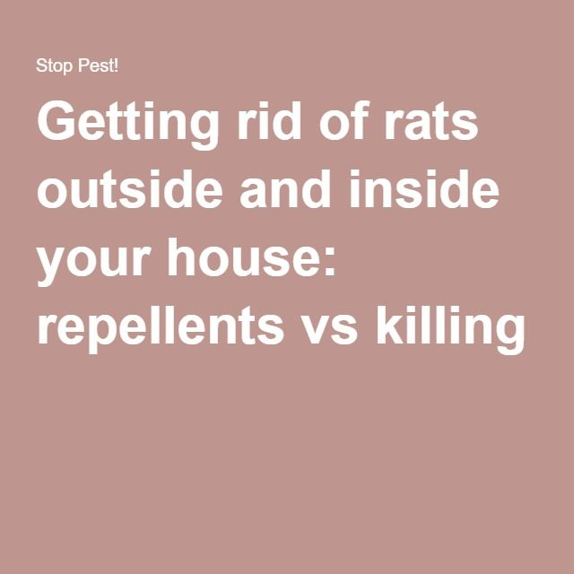 Getting Rid Of Rats Outside And Inside Your House Repellents Vs Killing My Home Pinterest