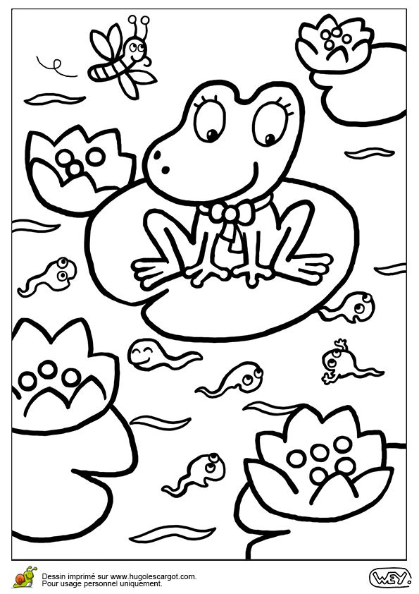 Les 25 meilleures id es concernant coloriage grenouille - Grenouille a colorier ...