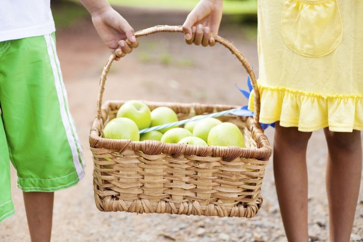 Pick-your-own apples in NJ | Apple picking