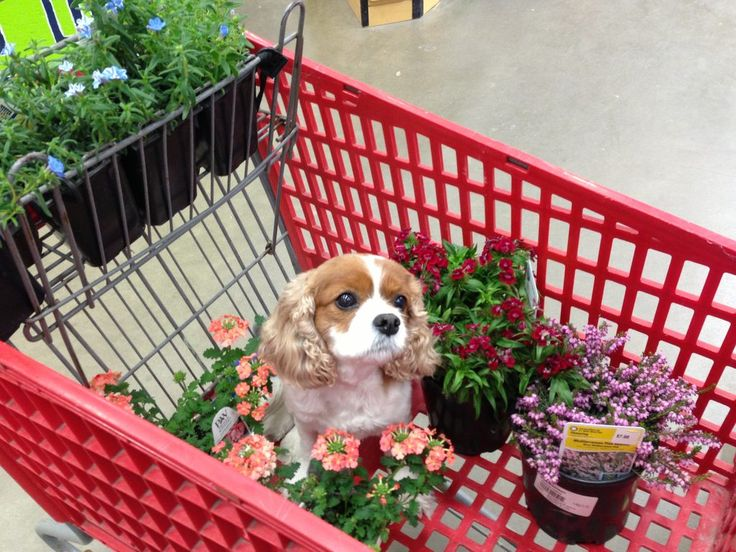 Izzy helping me shop