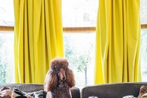 I am really liking the idea of yellow curtains in my bedroom!
