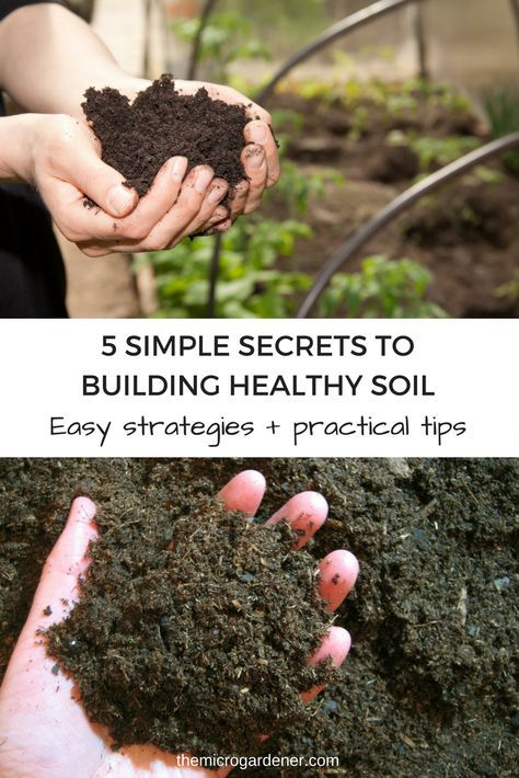 Discover how chemicals, digging and compaction, organic matter, ground covers and moisture affect soil health. Easy practical tips to create healthy soil and plants. | The Micro Gardener