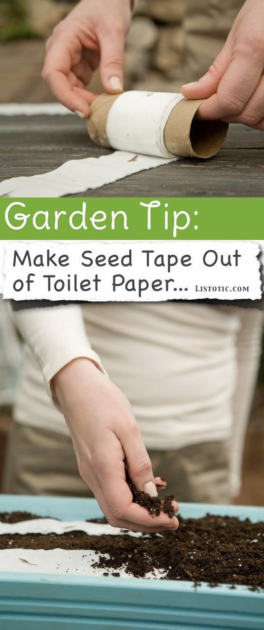 Previous pinner said:DIY Seed Tape Seed tape makes it easy to get your garden started by allowing you to plant the seeds right where you want them. You can also easily space the seeds out according to the seed packet's directions. Because toilet paper is biodegradable, you can easily make your own for little to no cost!