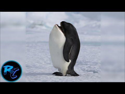 10 Most Animal Hybrids That Actually Exist!