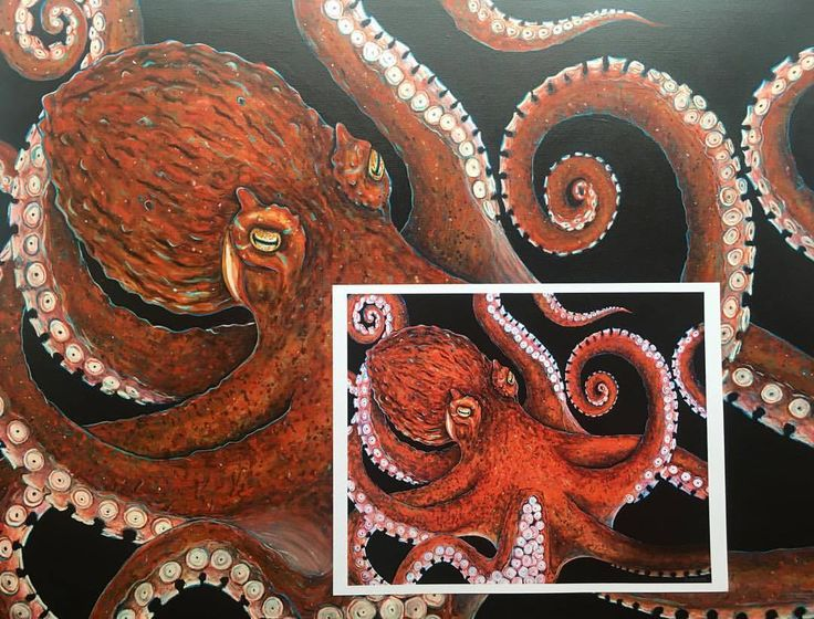 """OCTO-PRINTS! 11""""X14"""" prints of my Giant Pacific Octopus $20! Octopuses are badass and we all need more of them in our life 🐙 PM me! #suzywilsonart #octopus #giantpacificoctopus #tentacles #cephalopod #oceanart #artprints #wallart #sea #marinebiology..."""