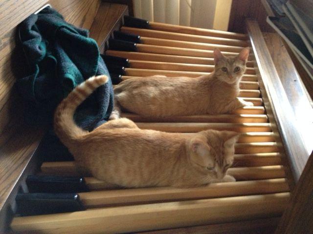 Kittens-on-the-organ-pedals.jpg (640×480)
