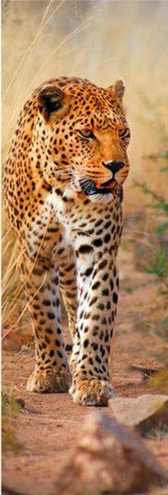 Vertikální puzzle DINO 1000 dílků - Leopard z Keni