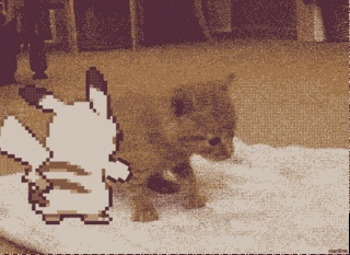 Pikachu Pushes Kitten - Pokemon GIF