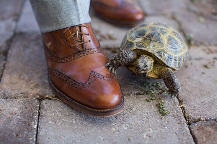 E Talk Browns Shoes